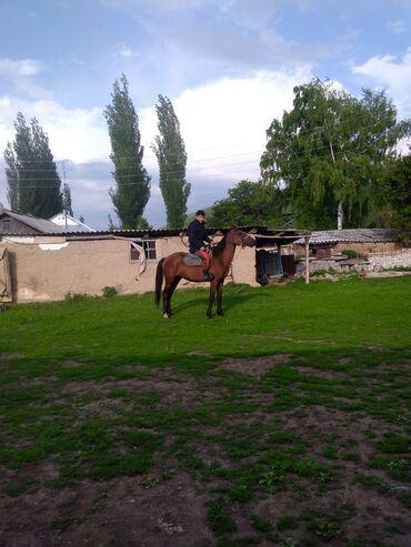 Животные - Алмалуу: Лошади, кони