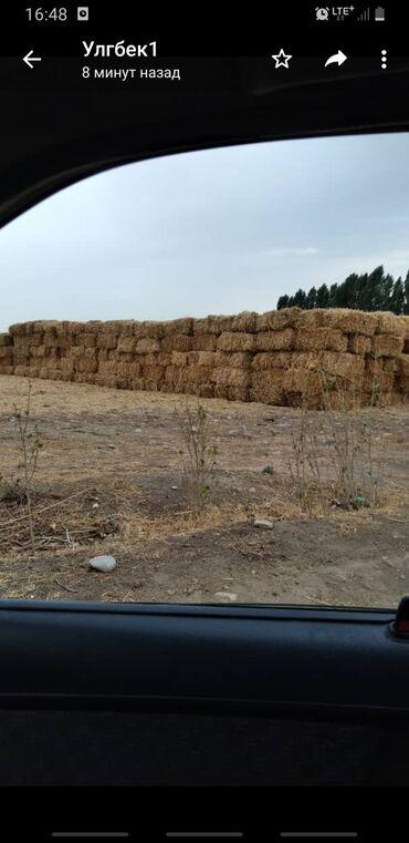 Животные - Кызыл-Кия: Саман пресс