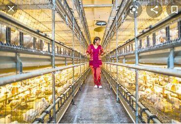 Девушки по вызову в оше - Кыргызстан: Срочно требуется работники на новый цех птицефабрики,в селе