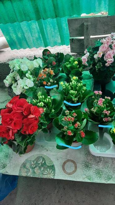 учитель истории вакансии бишкек in Кыргызстан | КНИГИ, ЖУРНАЛЫ, CD, DVD: Цветы Голландия в наличии. Прекрасный подарок для милых дам и учителей