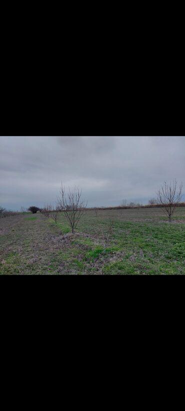 Torpaq sahələrinin satışı 114 sot Kənd təsərrüfatı, Mülkiyyətçi