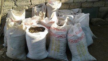 bir uşağın alınması - Azərbaycan: Temiz quru mal peyini toz kimi 100 kise olar yeke kiselerdedir bir