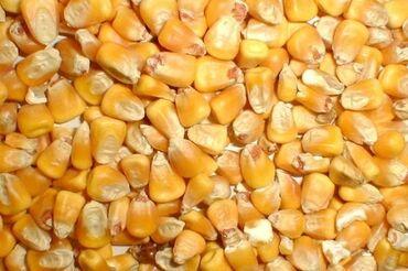 соя где купить в Кыргызстан: Куплю кукурузу! Рушенную и в початках. Самовывоз.   #кукуруза #дроблен