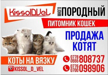 Питомник кошек kissol d vel предлогает в Кант