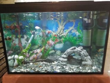 bitkiler - Azərbaycan: 130 litirpik 6 liq suseden ideal yiqilmis akvariyum Selale