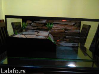 Stakleni terarijum za kornjace   sa svom scenografijom i opremom. - Nis