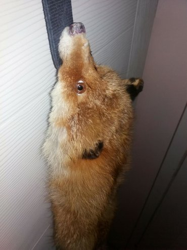 Prirodno krzno od lisice