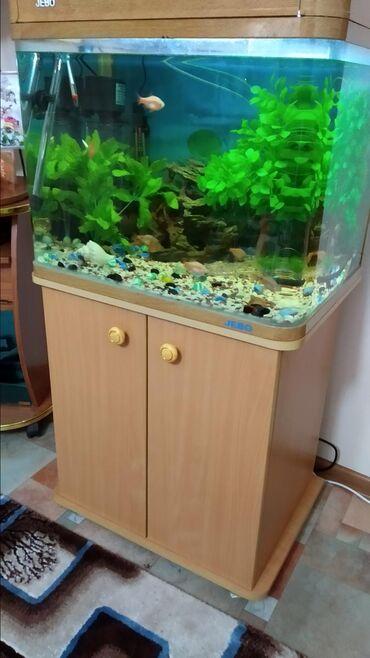 Аквариумы в Кыргызстан: Продаю аквариум на (100)литров. с оборудованием и рыбаками.аквариум