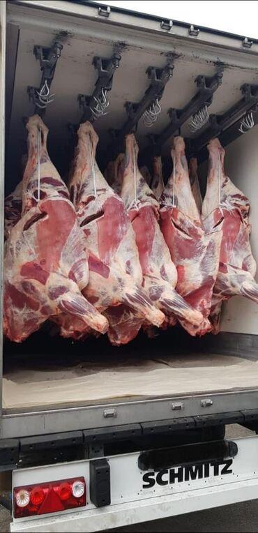 гиря чугунная 20 кг в Кыргызстан: Бычьи туши Вес от 200 до 250 кг ХАЛАЛ Охлаждённое мясо