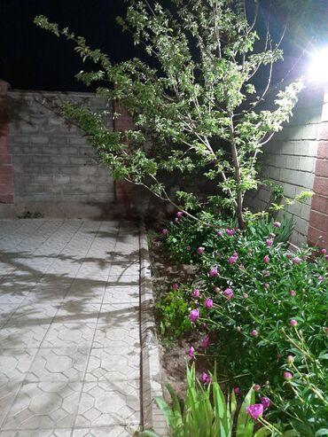 Аренда дома посуточно в Кыргызстан: Аренда Дома Посуточно от собственника: 460 кв. м, 7 комнат