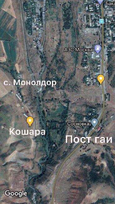 голые в Кыргызстан: Продается кошара село Сосновка 500 голов овец Чабанский дом имеется Св