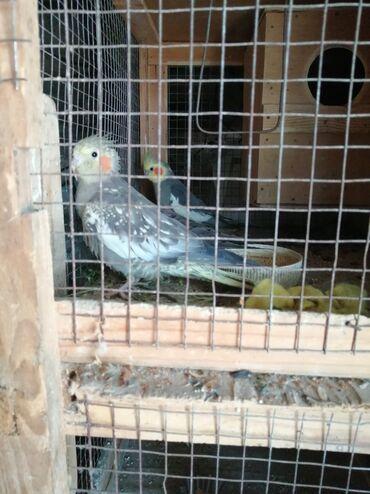Животные - Дюбенди: Птицы