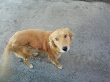 voennyj kung budka в Кыргызстан: Отдам в добрые руки собачку - 1 год, сучка, социально адаптирована