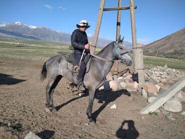 20 объявлений | ЖИВОТНЫЕ: Лошади, кони