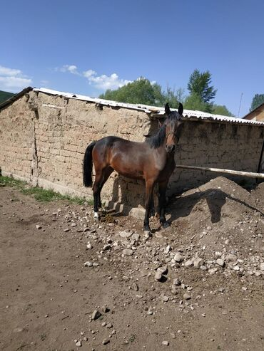 Животные - Раздольное: Лошади, кони