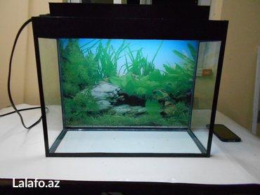 Bakı şəhərində teze akvariumlar uzunu 50sm hundurluyu qapaqla 44sm eni 25sm