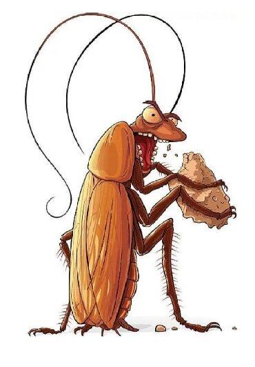 убираю квартиры в Кыргызстан: Дезинфекция от клопов тараканов и других вредителей насекомых