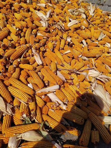 Продаю кукурузы чищенные