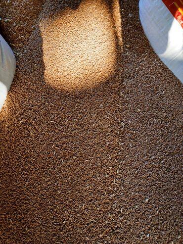 самсунг а 50 цена in Кыргызстан | SAMSUNG: Продаю семена пшеницы сорт,,Алексеевич,