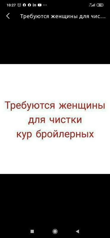 новые вакансии посудомойщица уборщица in Кыргызстан | ПЛАТЬЯ: Требуются женщины для чистки кур Чистить нужно только перья. График