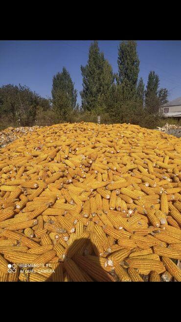 149 объявлений: Продаётся кукуруза 15 тонна по 15 сом