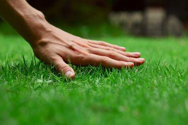 газон бишкек in Кыргызстан | ДРУГИЕ СТРОЙУСЛУГИ: Семена газона и посев газона!!!