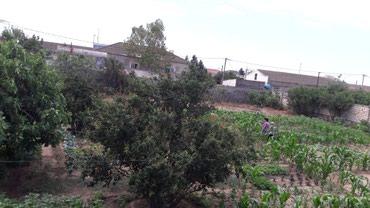 Bakı şəhərində Xezer r.onu zire qesebesinde astanovkaya yaxin 187 marsruta yolu 12