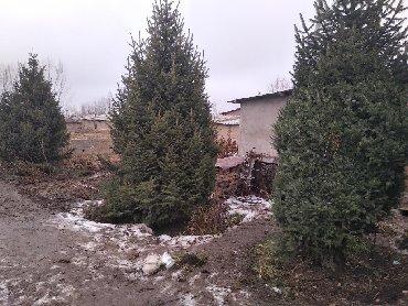 продажа двухэтажных домов в Кыргызстан: Обработка, Обрезка продажа,посадка хвойных и плодовых деревьев до