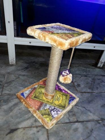 Bakı şəhərində Pisiklerin oynamasi ve dirnaqlarnin temizlenmesi ucun Qurgu.Catdirilma