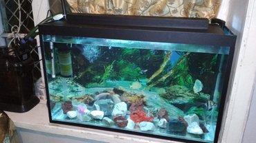 Bakı şəhərində Akvarium 148 litr su tutur uzunu 90sm hun 55 eni 30 sm  butun