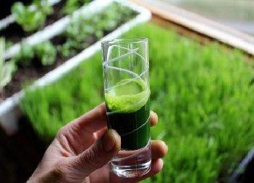витамины с магнием в Кыргызстан: Витграсс - сок из р? пшеницы.Эко продукт с уникальным с?.Получи пользу