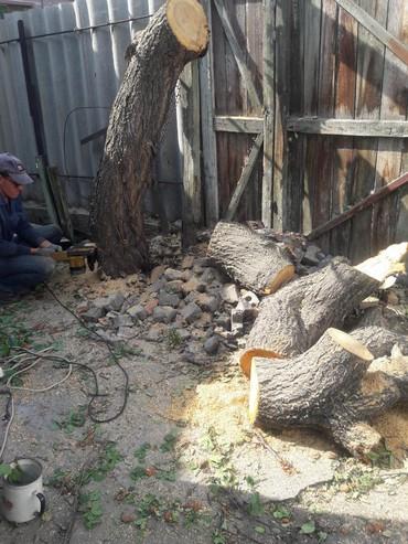 Пилим деревье! выполнение работы любой сло́жности.цена услуг после