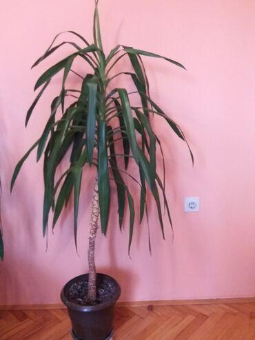 Lisca sa - Srbija: DRVO ZIVOTA vise stabala Cena za drvo zivota sa 1 i 2 i 3 fotografije