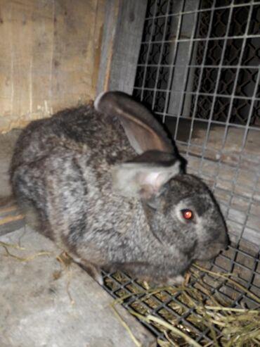 Прожаю кроликов обмен предлогайте