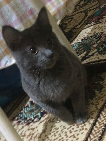 котенок в Кыргызстан: Пропал котёнок кто видел прошу отзовитесь