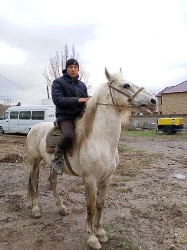 25 объявлений   ЖИВОТНЫЕ: Продаю   Конь (самец)