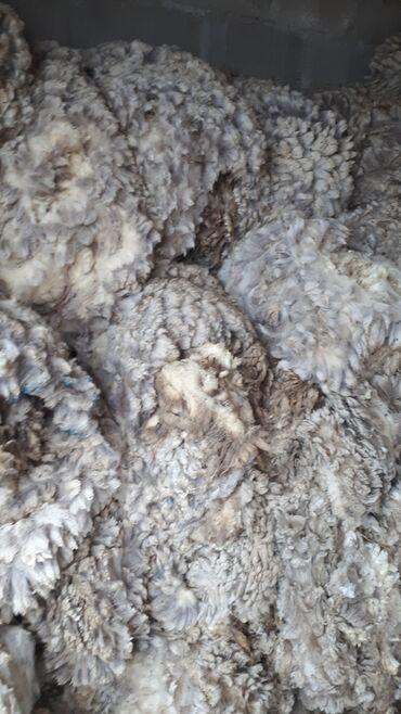 Животные - Тамчы: Продаю шерсть меринос