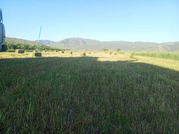 Животные - Балыкчы: Беде клевер горное сено с доставкой
