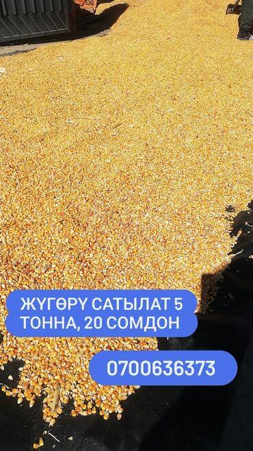 63 объявлений: Семена и уличные растения