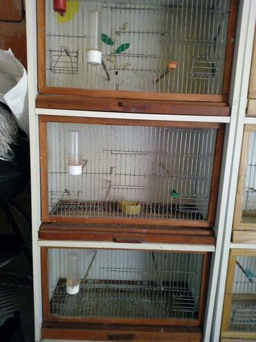 Kućne ptice | Srbija: Na prodaju dva kaveza