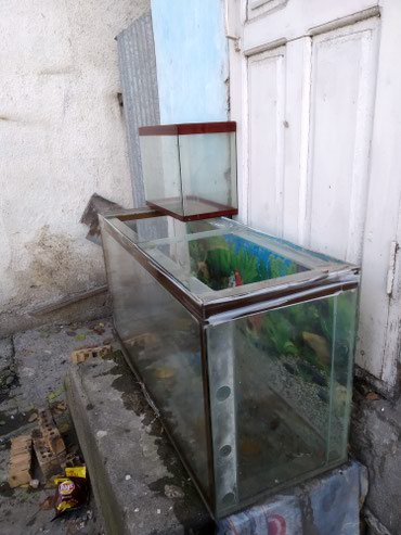Аквариум 200л в Узген