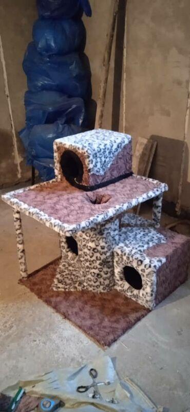 1077 объявлений: Продаю 2х этажный кошкин домЭлитная 3х комнатная кошачья квартира +