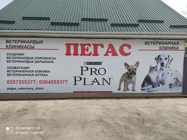 услуги фрезеровщика в Кыргызстан: Ветеринарная клиника Пегас. Зоомагазин г. Кант улица Гагарина 8