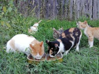 Mačke | Srbija: Poklanjam vise lepih, odraslih maca ljubiteljima! Osim ovih na