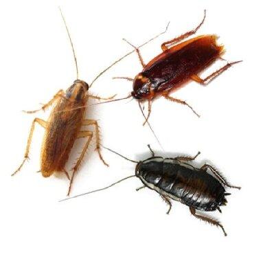убираю квартиры в Кыргызстан: Дезинфекция уничтожения клопов тараканов и других вредителей насекомых