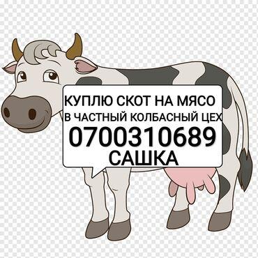 Животные - Кыргызстан: Куплю в частный колбасный цех скот любой упитанностиприезжаю сам. Без