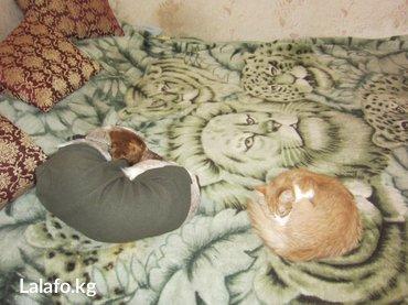 Гостиница для собак. Услуги Зооняни. в Бишкек