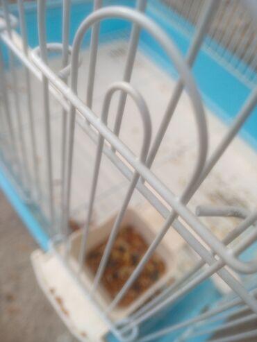 138 объявлений   ЖИВОТНЫЕ: Продаю попугая за 3000 сом в месте с клеткой. Адрес алатоо1. Звоните