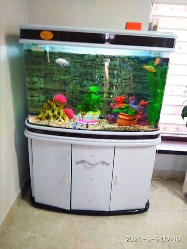 Аквариумы - Кыргызстан: Продаю заводской аквариум 285 литров, цвет белый, очень хорошо