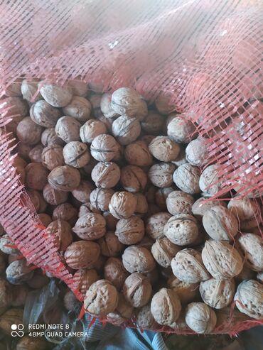 ствол грецкого ореха в Кыргызстан: Продаю грецкие орехи 160 за кг около 30 кг